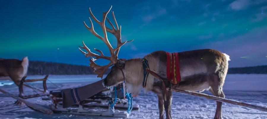 rentierschlitten-polarlicht-finnland.jpg