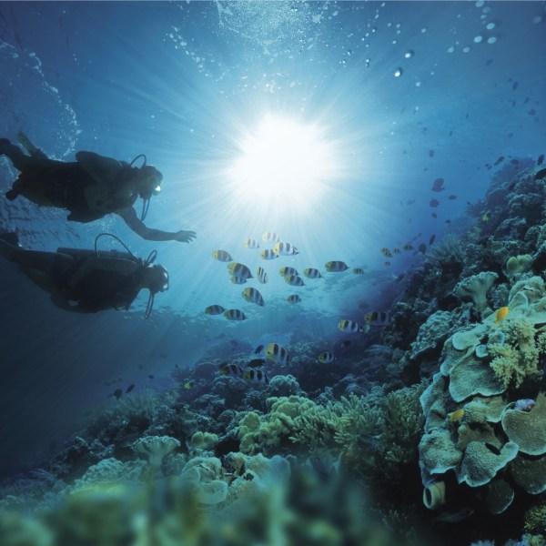 Sandals Negril Beach Resort & Spa Diving