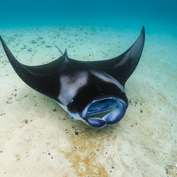 Ocean Dimensions Kihaa Maldives