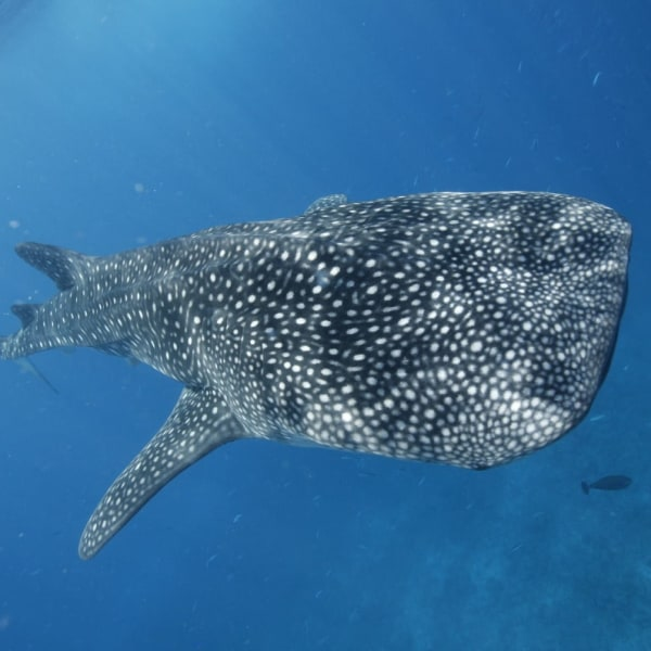 Euro Divers Lux South Ari Atoll