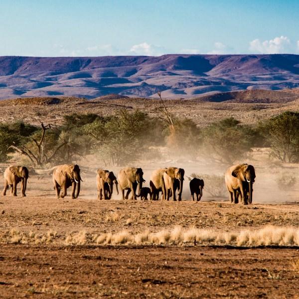 Auf der Fährte der Wüstenelefanten, im Land der Himbas und der ältesten Wüste der Erde