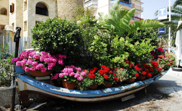 Boot als Blumenschmuck_Italiafoto_2815.jpg
