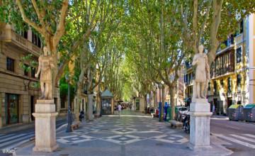 Palma Passeig Borne Fotolia_85756519_S_c.JPG