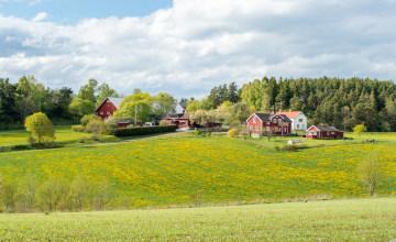 Småland_123RF_96862611_l.jpg