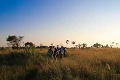 Okavango Delta Bushwalk