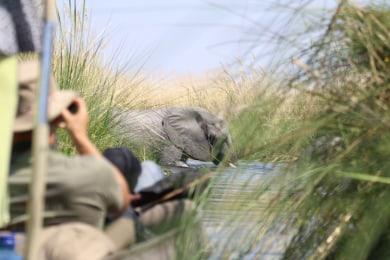 Okavango Delta Mokoro Tour
