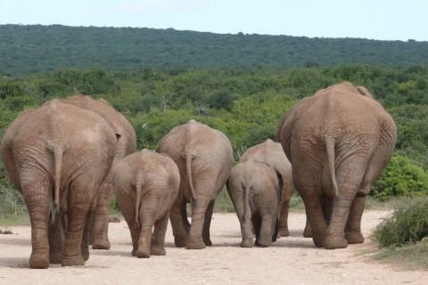 Addo Elephant Park - 19 Tage Mietwagenreise von Johannesburg bis Kapstadt