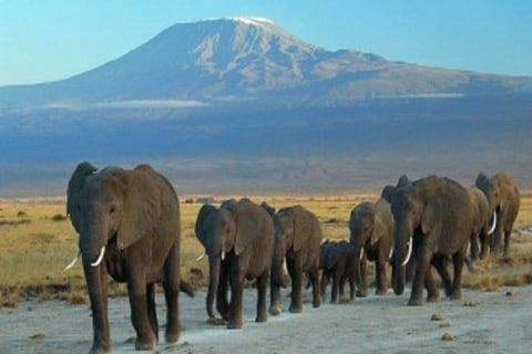 Amboseli_wildlife_elephants_2.jpg