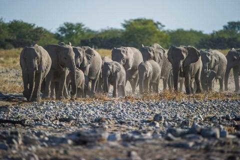 Etosha Elefantenherde, Kleingruppenreise Capetown und Namibias Highlights