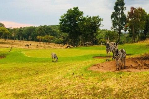 Game Heaven Malawi.jpeg