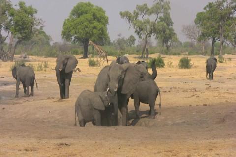 Hwange-Nationalpark-Simbabwe