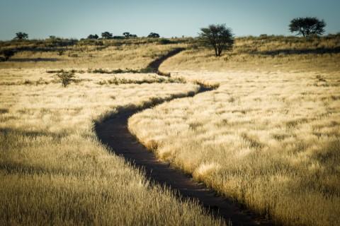 Weg in der Kalahari bei unserer großen Süd West Route