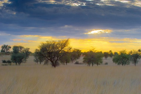 Kalahari.jpg