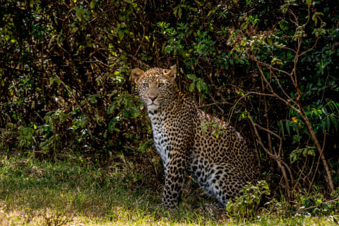 Kenia Safari Aberdare Nationalpark