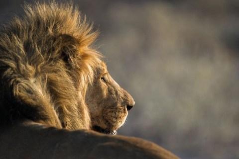 Etosha Nationalpark