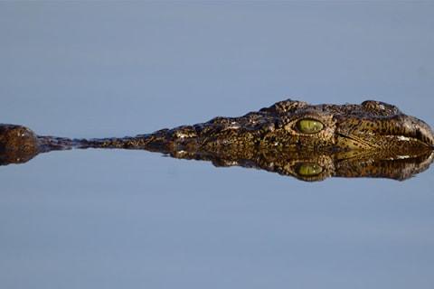 Krokodil - 19 Tage Mietwagenreise von Johannesburg bis Kapstadt