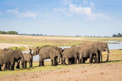 Kudu Safari 7.jpg