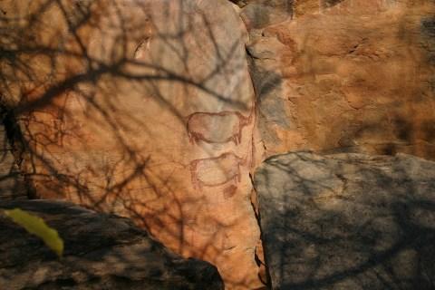Kudu Safari Tsodilo Hills