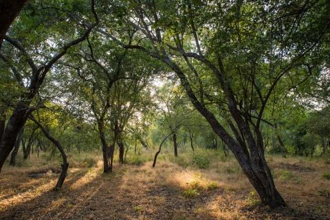 Kuti Wildlife Reserve Sunways.jpg