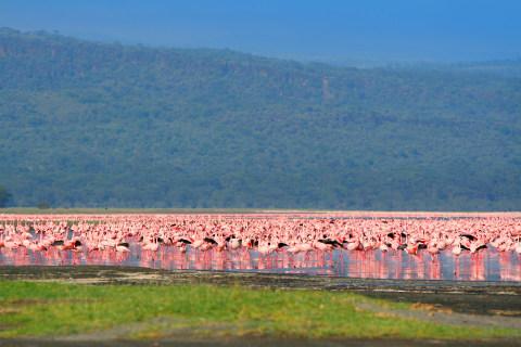 Lake Nakuro