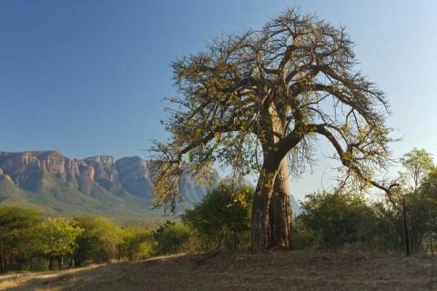 Limpopo Provinz