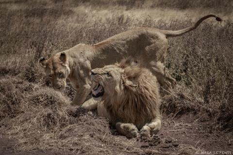 Masai Mara - ExpoDormund 2018 (13).jpg