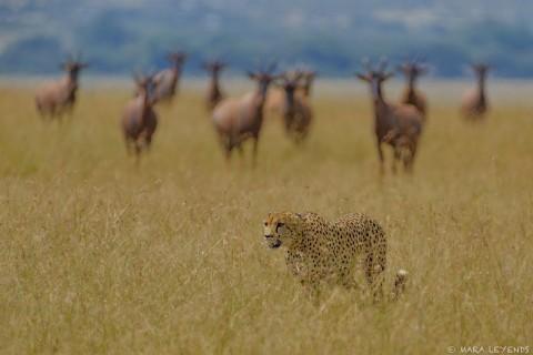 Kenia Fotoreise