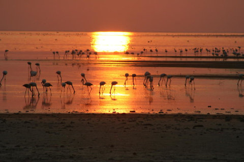 Flamingos in den Makgadikgadi Salzpfannen