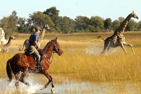 Okavango Horse safaris1.jpg