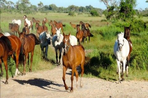 Okavango Horse safaris6.jpg