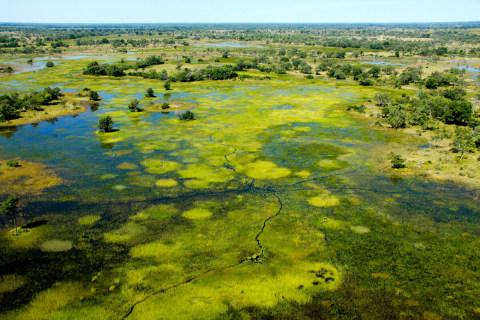 Okavango Horse safaris8.jpg