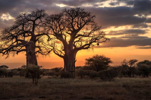 Tarangire Tansania