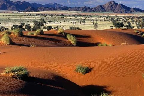 Tok Tokkie Trails Namibia Duenen.jpg