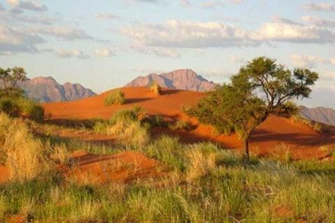 Tok Tokkie Trails Namibia Duenenlandschaft.jpg