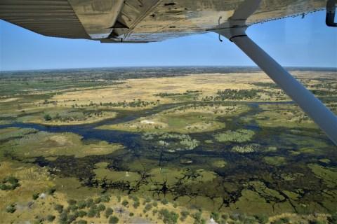 Okavango Delta - Maun