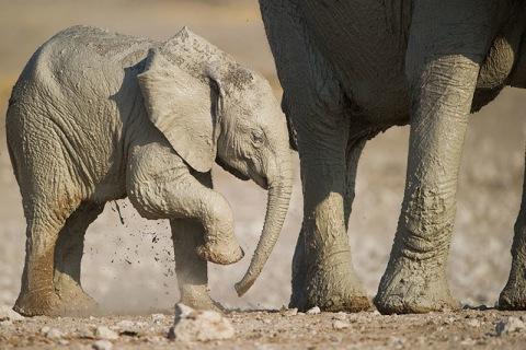 Elefantenbaby - 19 Tage Mietwagenreise von Johannesburg bis Kapstadt