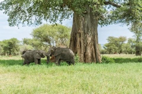 elephant-4032274_960_720_fb50ff84-444f-47ec-9c42-b59bb7d059f0.jpg