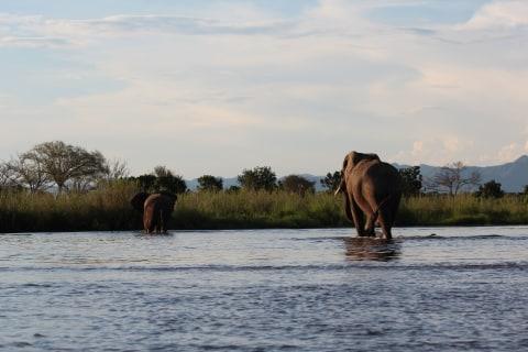 Camping Kanusafari