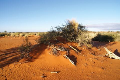 Kalahari Düne bei unserer großen Süd West Route