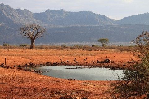 Kenia Fotosafari