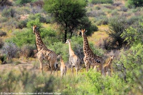 o_GocheGanas-Wildlife-12.jpg