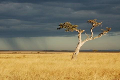 savanna-2796791.jpg