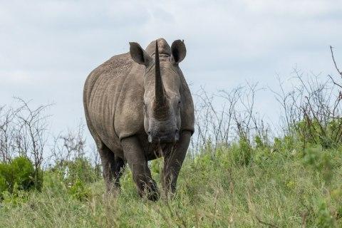 Isimangiliso Nationalpark