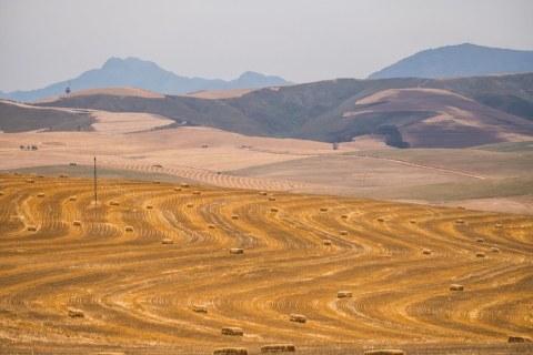 Karoo Wüste
