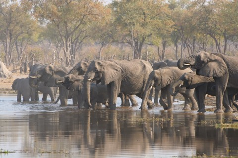 Moremi Nationalpark