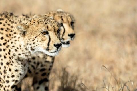 Sunway Safari