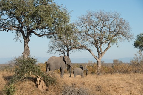 Kruger Manyaleti