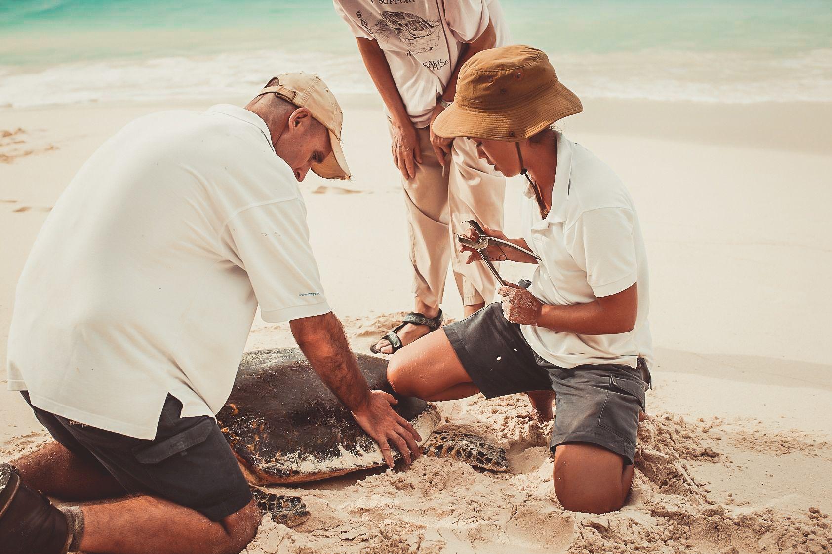 Strand Conservation