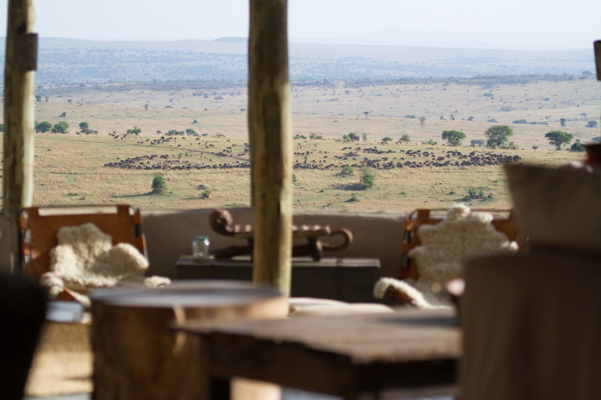 Ausblick vom Lamai Serengeti auf Gnuherden