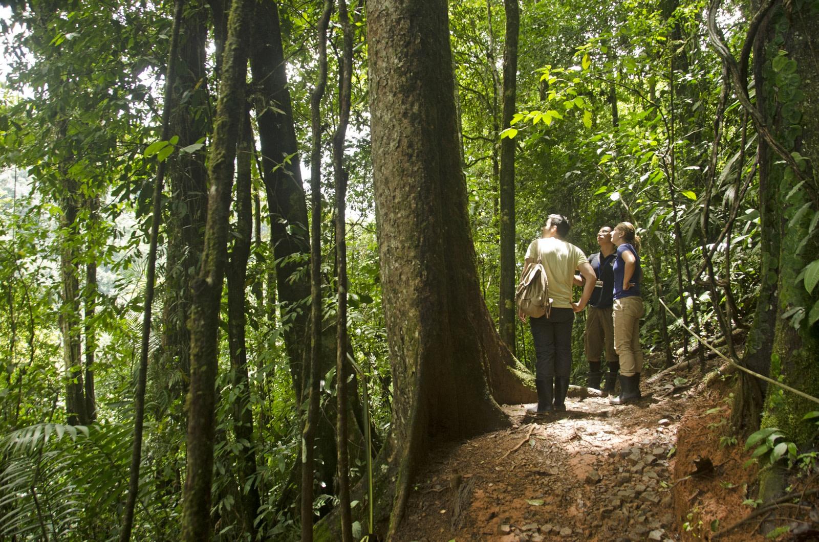 Urwald-Wanderung